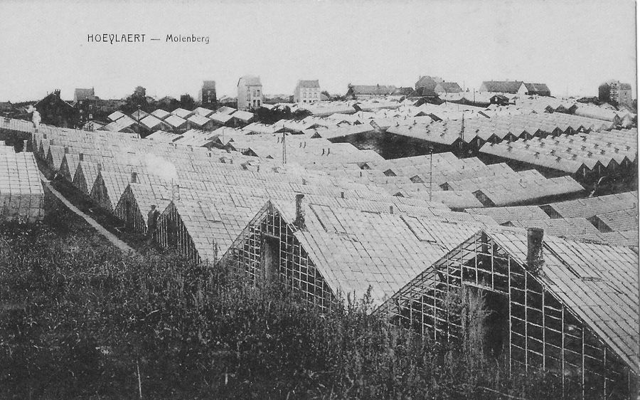 Molenberg Solheide